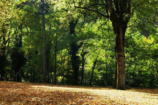 Le Parc de Saint Gervais